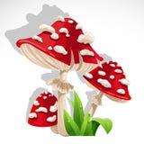 W trawie czerwony świeży Pieczarkowy amanita Obraz Stock