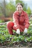 W truskawkowej roślinie dojrzała kobieta Obrazy Stock
