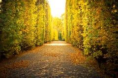 W żółtym jesiennym parku piękna aleja Zdjęcia Stock