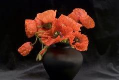 W wazie czerwoni makowi kwiaty Zdjęcie Stock