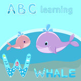 W is for Whale Baby whale with water splash vector illustration Cute cartoon whale vector. Vector illustration of Baby whale with water splash vector vector illustration