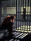 W więzienie zdjęcie royalty free