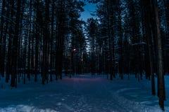 W wieczór w ciemnym lesie, lampiony palą na ścieżce w zimie zdjęcia royalty free