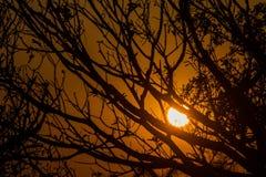 W wieczór Słońca położenie za gałąź które są tłem, Zdjęcia Royalty Free