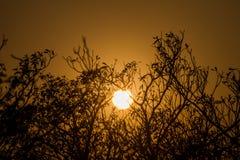 W wieczór słońce ustawia za drzewami Co jest tłem Zdjęcia Stock