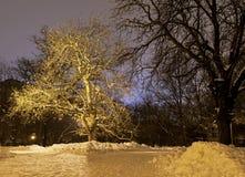 W świetle reflektorów Zdjęcie Royalty Free