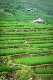 W Wietnam kroka ryżowy taras Zdjęcie Royalty Free