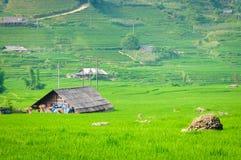 W Wietnam kroka ryżowy taras Obrazy Royalty Free