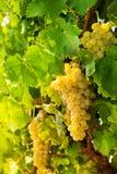 W winograd dolinie uroczy południe Obraz Royalty Free