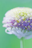 W wiosna biały kwiat Zdjęcia Stock