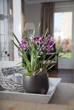 W wnętrzu Mitonia orchidea Obrazy Stock