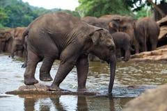 W wodzie słonia śmieszny dziecko Fotografia Stock