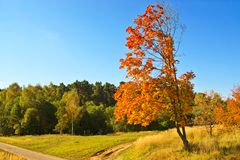 W wsi jesień drzewo Obrazy Royalty Free