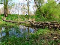 W wsi podgniły drzewo Obraz Royalty Free