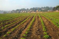 W wsi uprawy linia. Fotografia Stock