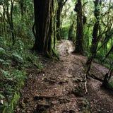 W zawiły sposób ścieżki w tropikalnej roślinności Obrazy Stock
