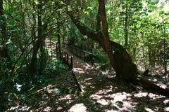 W zawiły sposób ścieżki w tropikalnej roślinności Obrazy Royalty Free