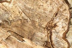 W zawiły sposób wzory w powalać drzewie obraz stock