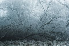 W zimie drzewo spadał w mgłę Fotografia Royalty Free