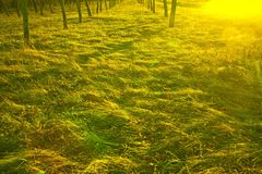 W zmierzchu świetle jesień las. Obraz Stock