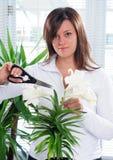W0oman y planta Fotografía de archivo