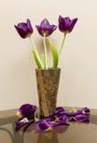 Wałkoni się tulipany Zdjęcie Royalty Free