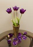 Wałkoni się tulipany Zdjęcie Stock