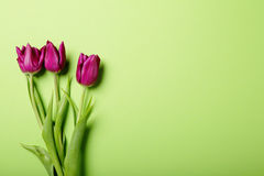 Wałkoni się tulipany na zieleni Obrazy Stock