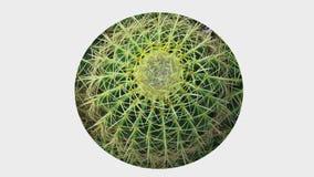 Wałkowej Poduszkowej Kaktusowej zawijas tekstury tła Round wizerunek zdjęcia royalty free