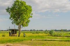 Wa Mbu della Tanzania - lago Manyara - di Mto Fotografia Stock