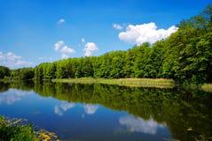 Waaier van bomen op hemelachtergrond Stock Foto's