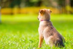 waakzaam onderzoekt weinig puppy de afstand stock fotografie