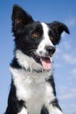 Waakzame en gelukkige hond. Royalty-vrije Stock Foto's