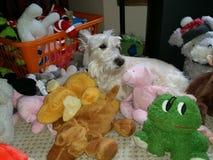 Waar de hond is Royalty-vrije Stock Afbeelding