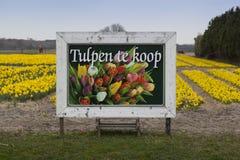 Waar zijn de tulpen? Zdjęcie Stock