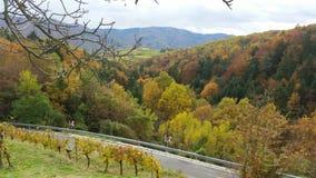 Wachau dal i höst Arkivbilder