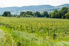 Wachau dal med vingårdar, Österrike Arkivbilder