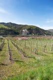 Wachau dal på våren Fotografering för Bildbyråer