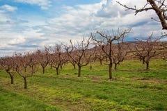 Wachau landscape royalty free stock photography