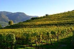Wachau Oostenrijk van de wijn royalty-vrije stock afbeelding