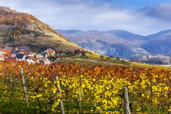 Wachau valley. Lower Austria. Autumn colored leaves and vineyards on a sunny day. Wachau valley. Lower Austria. Autumn colored leaves and vineyards royalty free stock photos