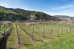 Wachau Valley in the spring Royalty Free Stock Photos