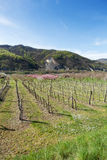 Wachau Valley in the spring Stock Image
