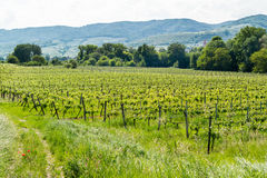 Wachau Valley with vineyards, Austria Stock Images