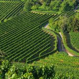 Wachau vineyard Stock Photo