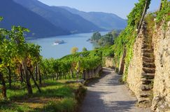 Wachau vineyard Royalty Free Stock Images