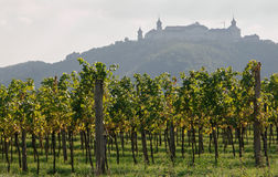 Wachau winnica Fotografia Royalty Free