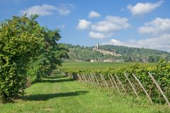 Wachenheim,german Wine Route,Germany royalty free stock photos