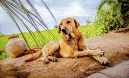 wachhund Stockbild