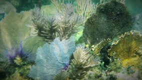 Wachluje Koral Obraz Stock
